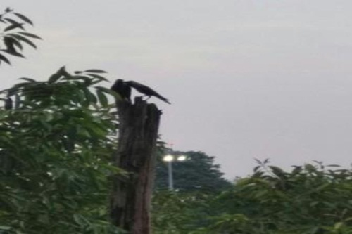 Birds sitting and playing on a tree