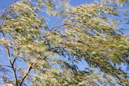 Wind blowing felt in trees
