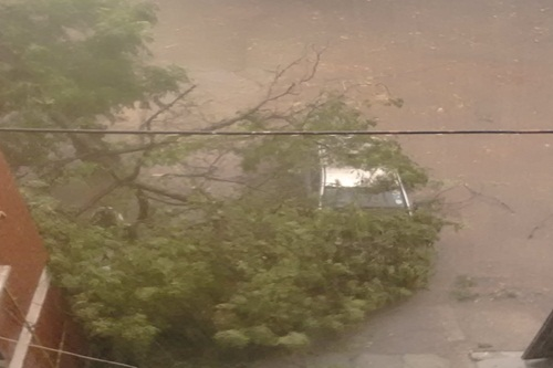 Tree fell on a car during a storm