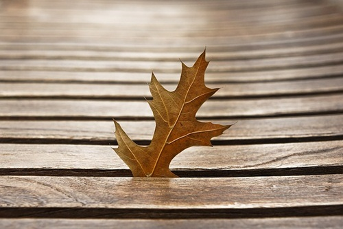 Leaf stucked in between